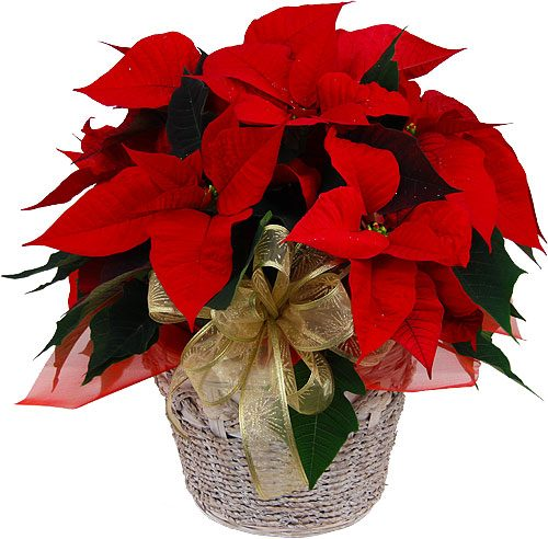 Thank You For the 2015 Christmas Poinsettia Donations